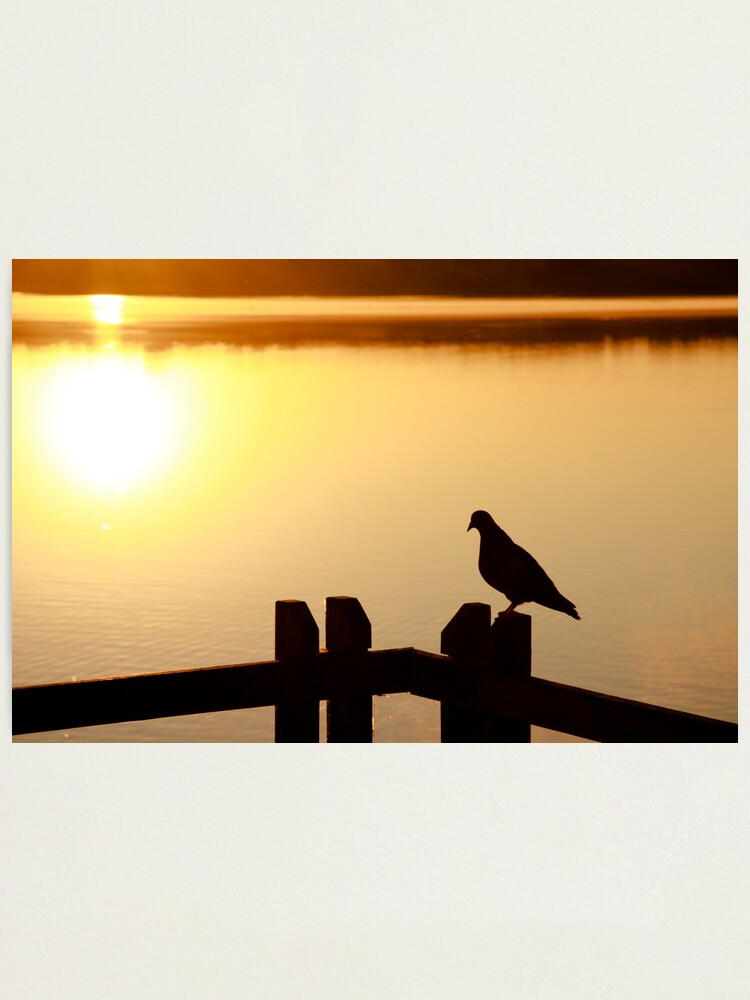 Alternate view of Pigeon sitting on the jetty Photographic Print