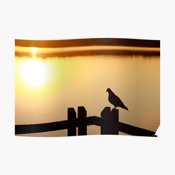 Pigeon sitting on the jetty Poster