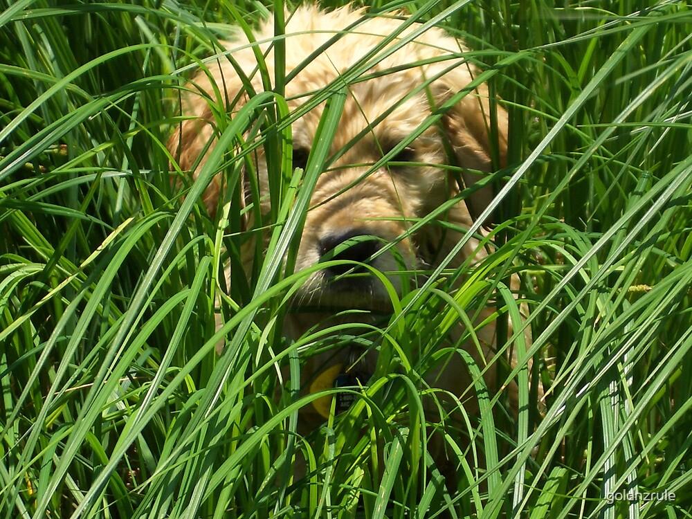Osiris peek a boo river grass by goldnzrule