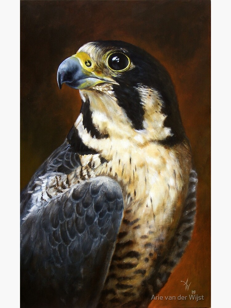Proud - Peregrine Falcon by Aart