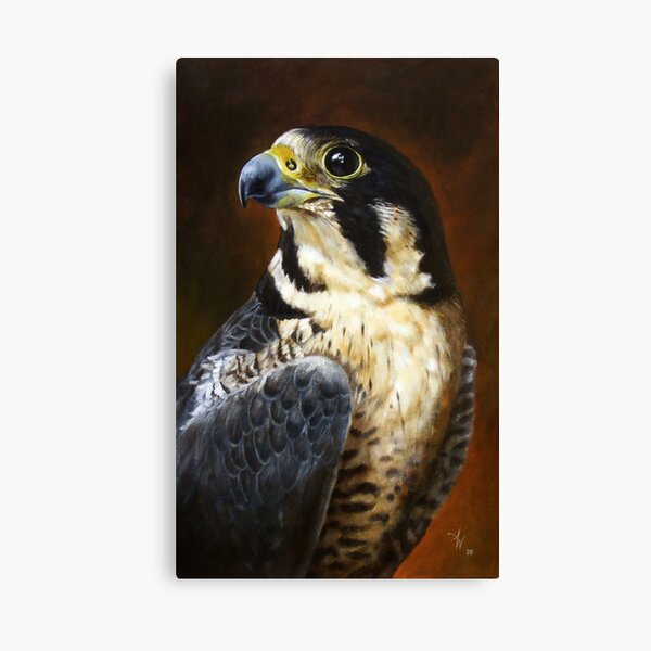 Proud - Peregrine Falcon Canvas Print