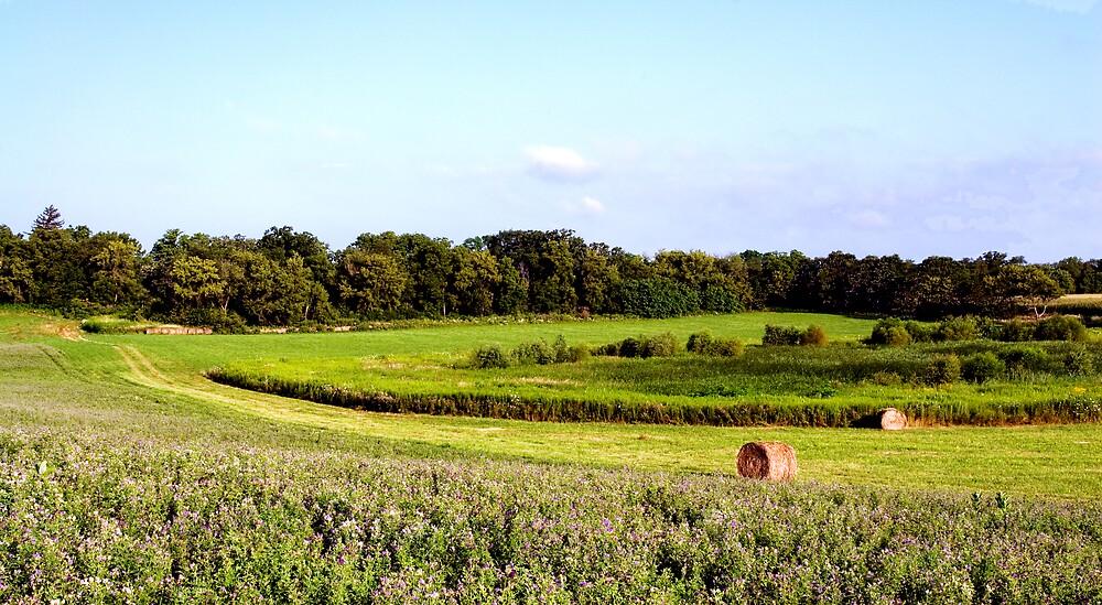 Alfalfa Hill by Grady Mankin