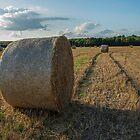 Harvest by DonMc