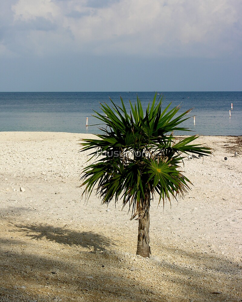 lonely palm on the beach by 1busymom