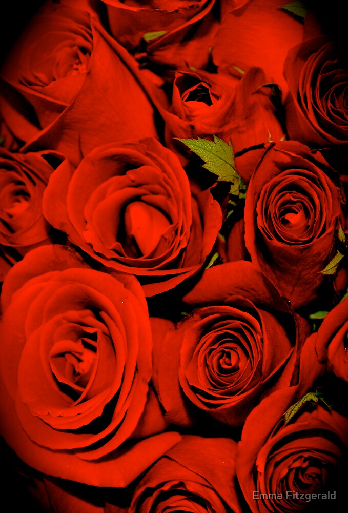 Red Roses by Emma Fitzgerald