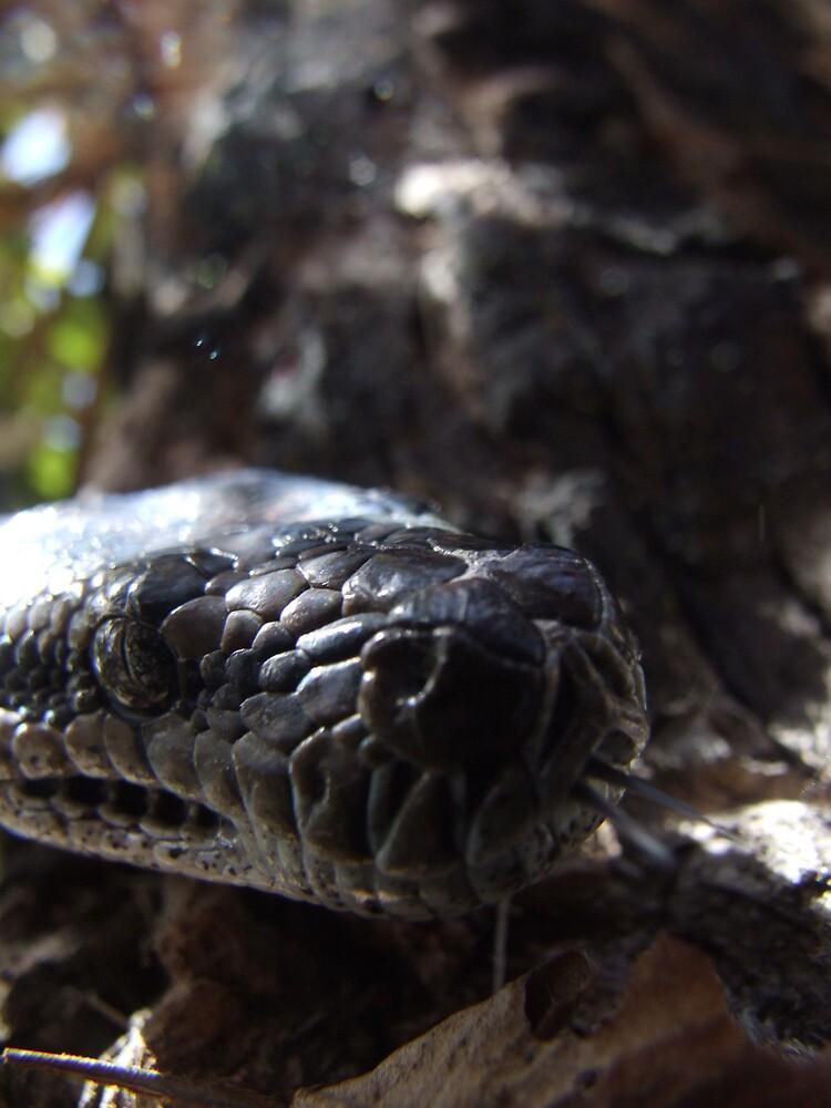 Python by Linda Sass