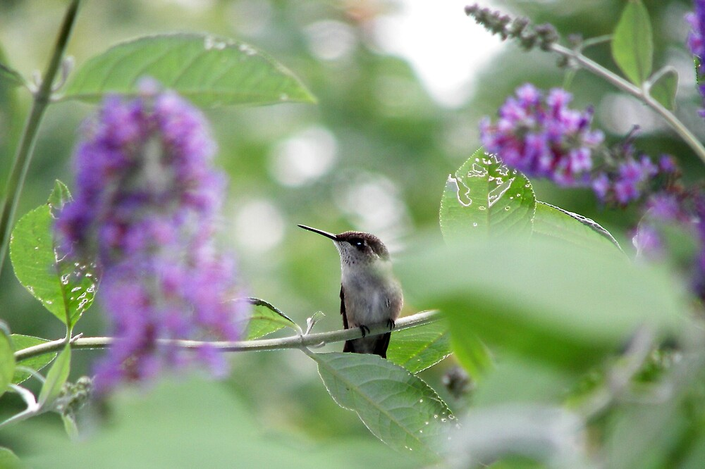 Another view of the Hummingbird by madmac57