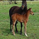 Mare and Foal by adbetron