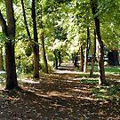 Path of Peacefulness by NancyC