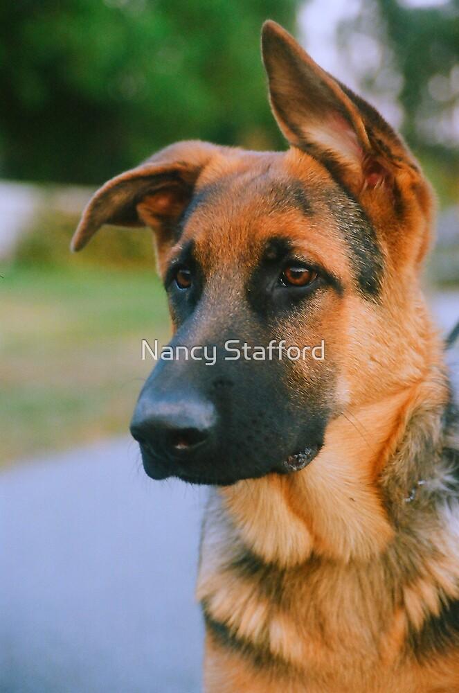 Portrait of a German Shepard Puppy by Nancy Stafford