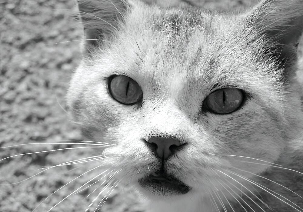 cemetery cat by eeet