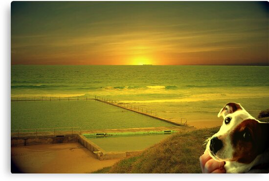 Bulli sunrise by robert murray