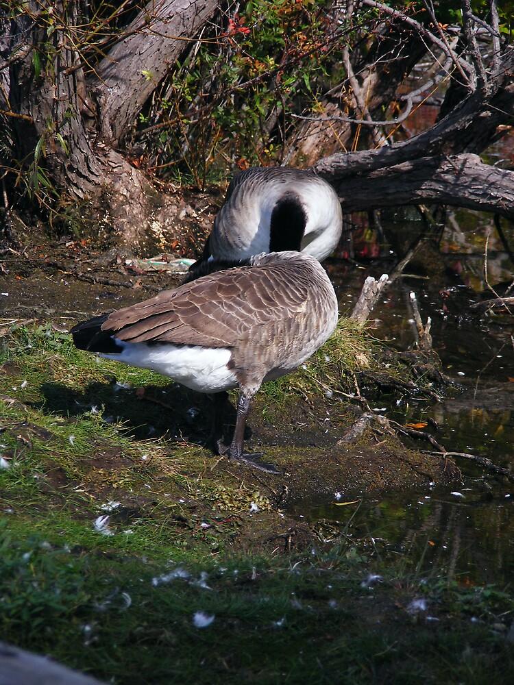 The headless geese by Tamara Bobst