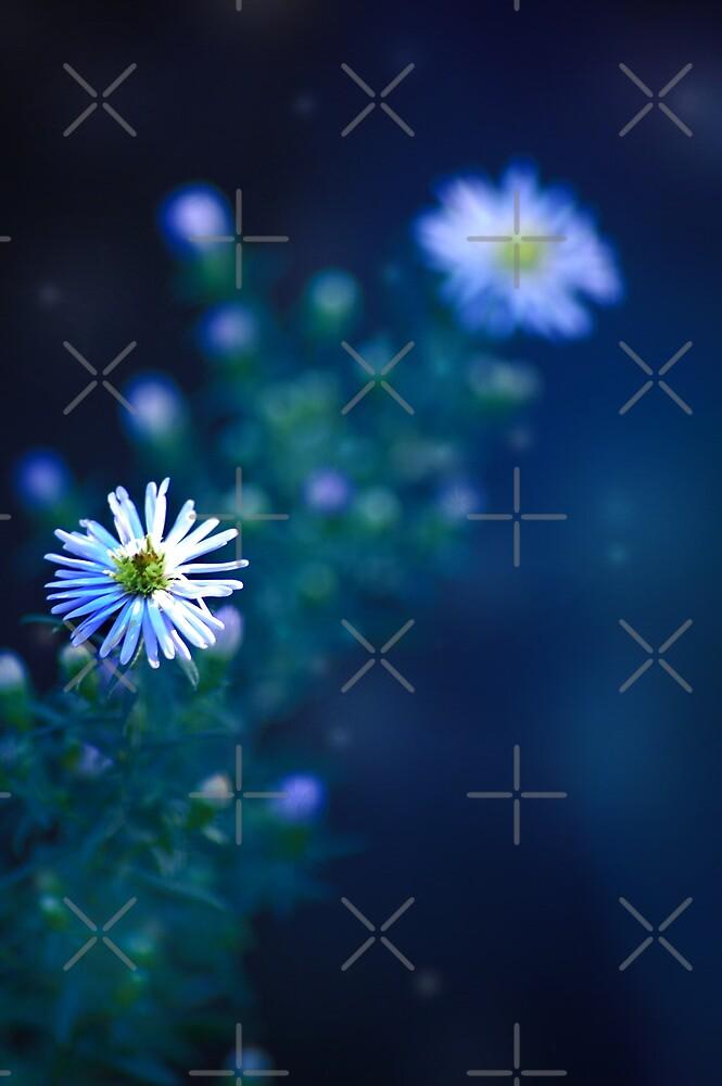 Blue Twinkle Flowers by Angie Seiffert