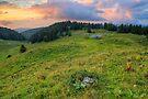 Dusk light on the alpine meadow by Patrick Morand