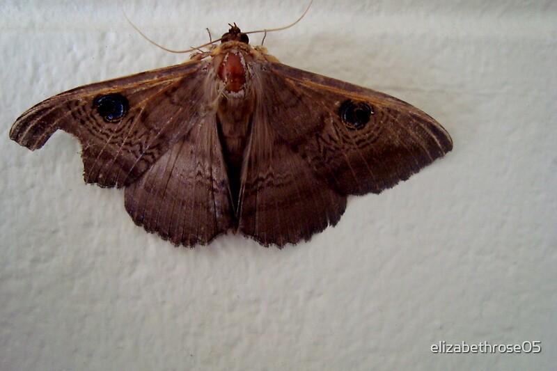 Wood Moth by elizabethrose05