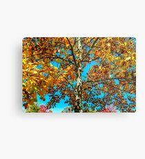 Vivid autumnal colors of leaves in the park, Strasbourg, France Metal Print