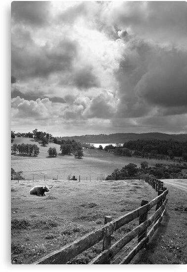 Harvey on a Stormy Day 3 B/W by Roland de Haas