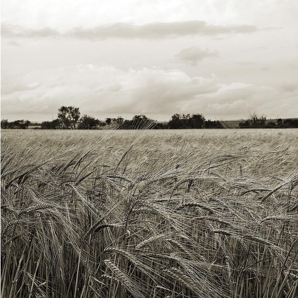 Grain by Roland de Haas