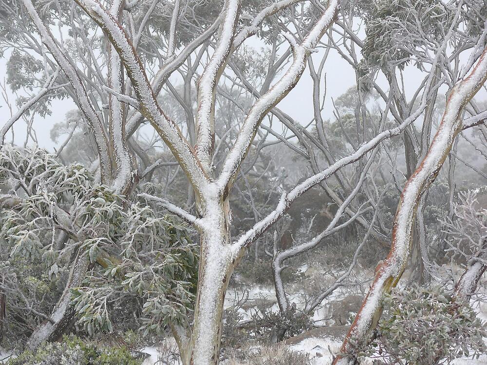 Snowy Trees by Keith G. Hawley