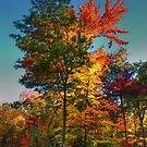 Burst of Color by LizzieMorrison