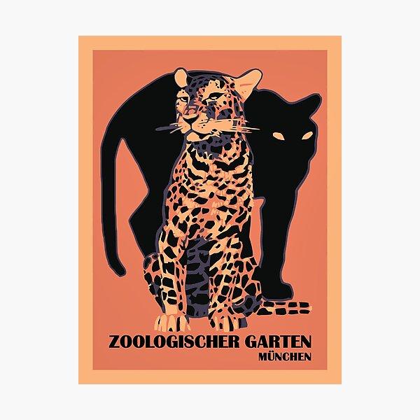 Retro vintage Munich Zoo big cats Photographic Print