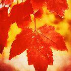 Flammender Herbst von Anita Pollak
