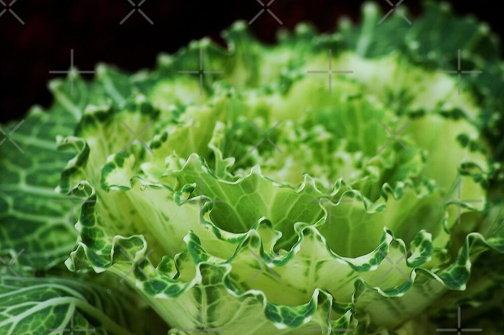Green cabbage by loiteke