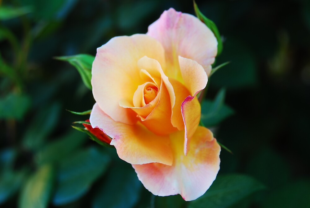 A rose by any other name by Fred  Smith