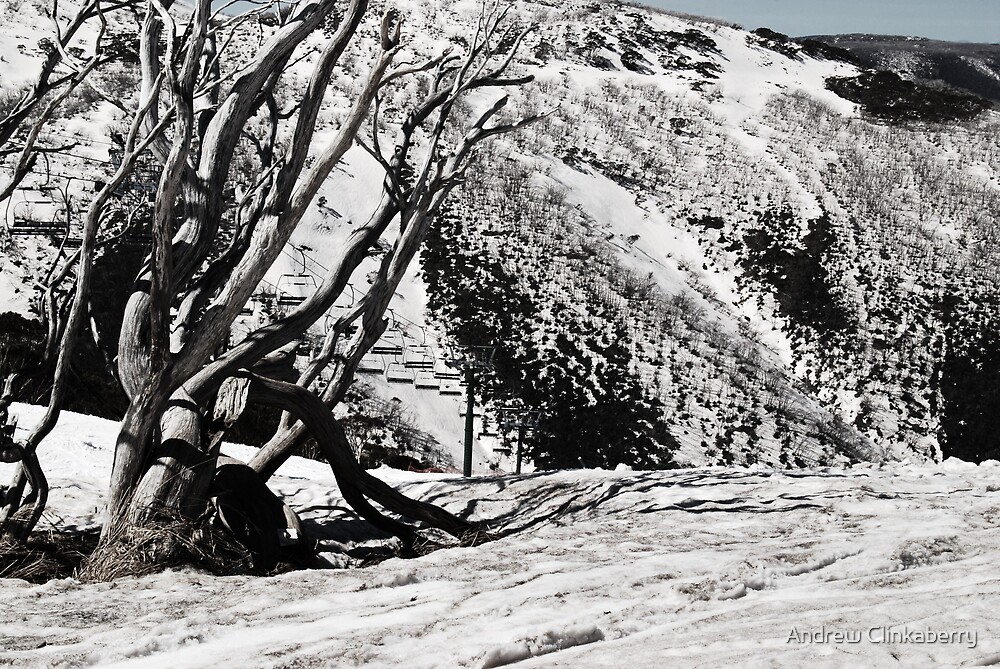 It's a tree and it's cold :) by Andrew Clinkaberry