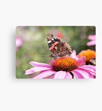 Red Admiral on Flower Canvas Print