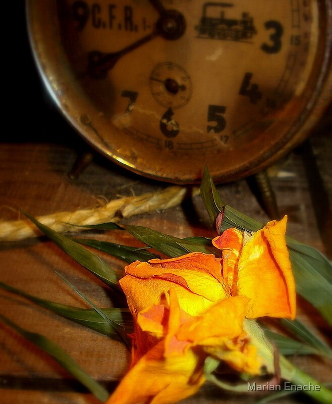 roses time by Marian Enache