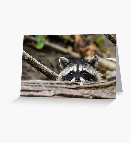Peering Raccoon Greeting Card