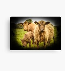 just cows Canvas Print