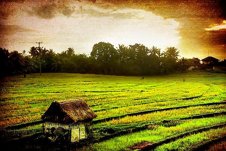 My sunrise  by ellyss_ art