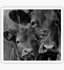 black cute cows Sticker