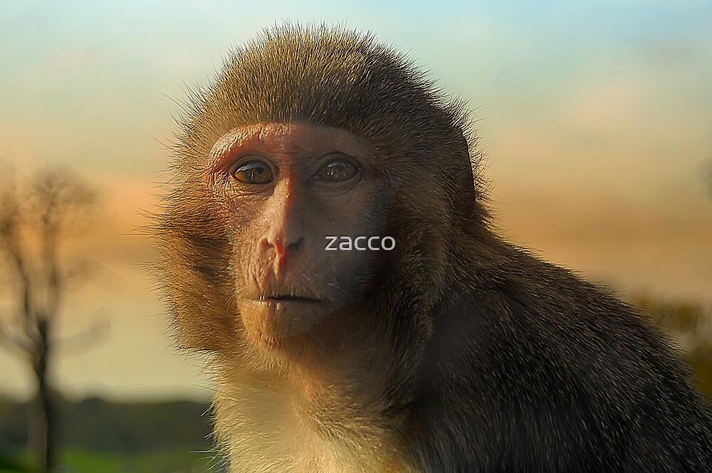 monkey madness 2 longleat by zacco