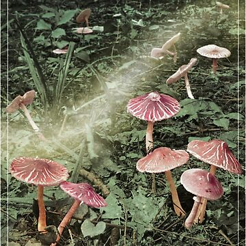 Fairyland (Mushrooms) by figfive