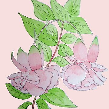 Pink fuchsia flowers with leaves water-color art  by pollywolly