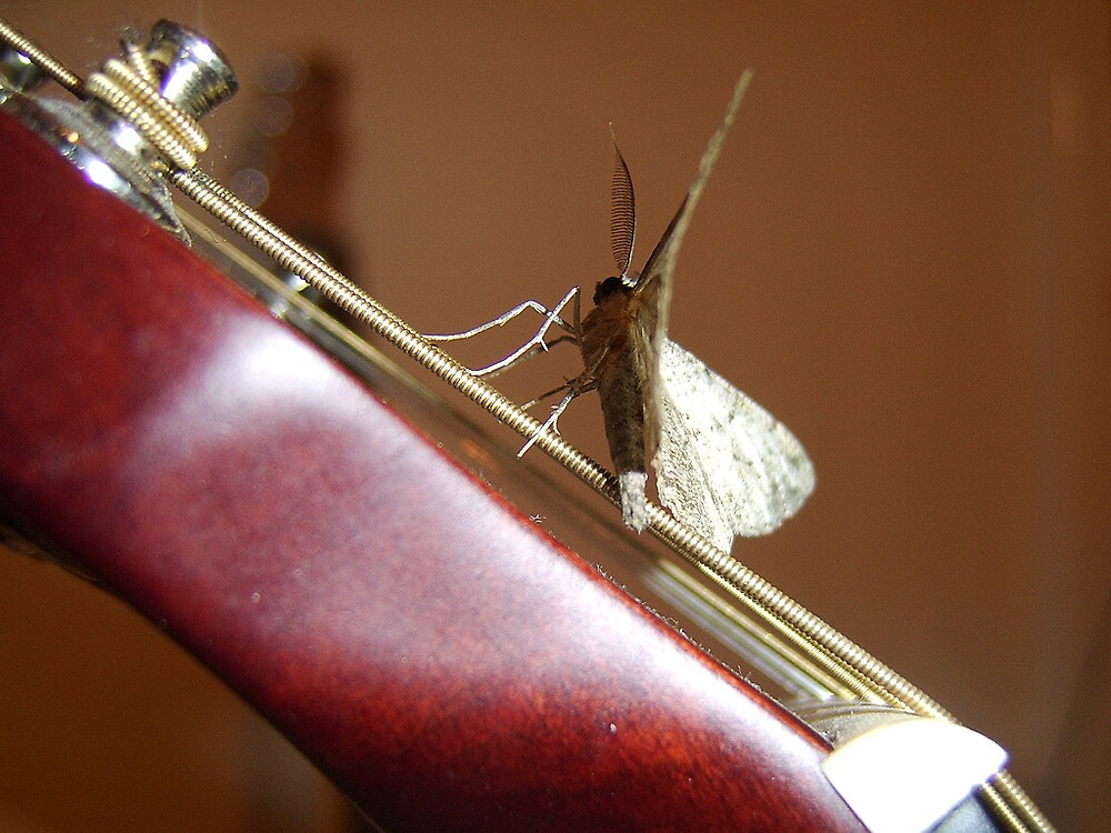 acoustic moth by whiteout75