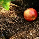 An Apple by R&PChristianDesign &Photography