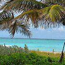 Tropical View by photorolandi