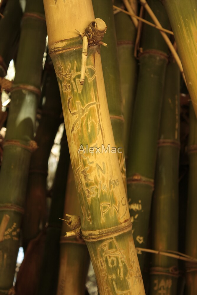 Bamboo by AlexMac