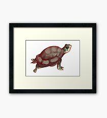 Turtle Sticker  Framed Print