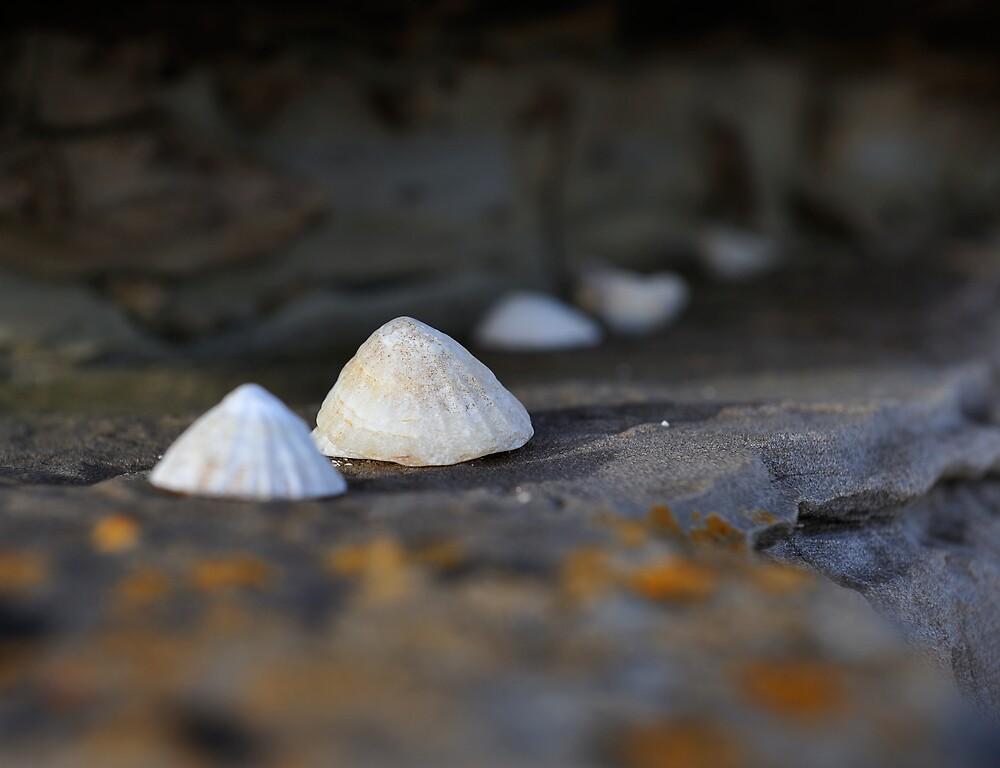 The Small Landscape by Jamie Buchanan