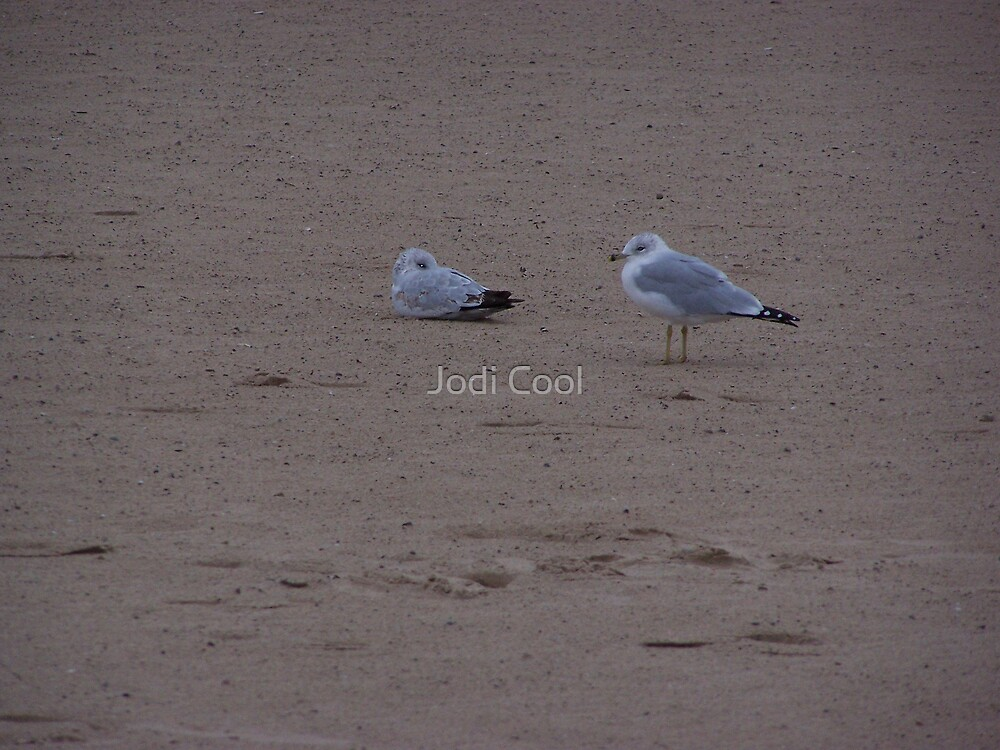 sea gulls by Jodi Cool