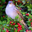This Little Bird by R&PChristianDesign &Photography