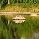 Rock Reflection by Tammy F