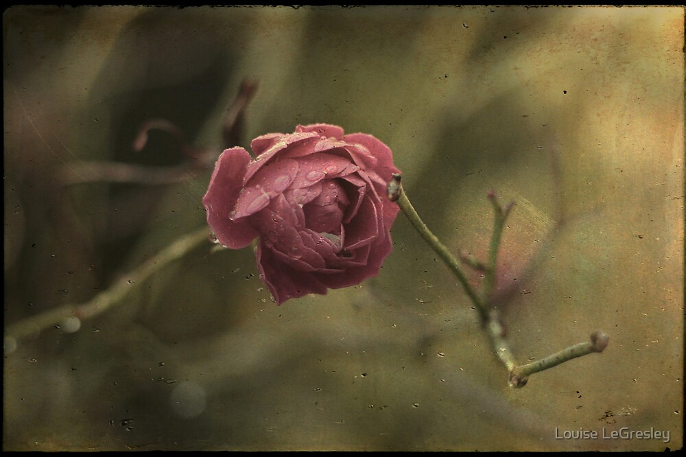 _ la rose _ by Louise LeGresley