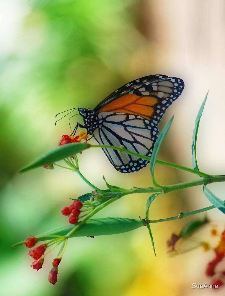 Butterfly Beautiful by SueAnne